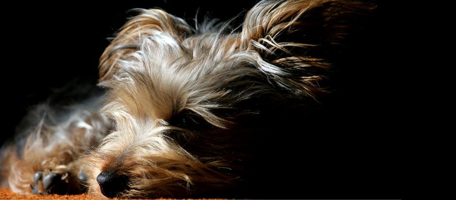 Riversong Veterinary Clinic - Providing compassionate