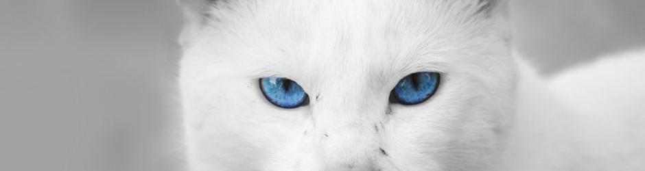 white-cat